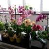 Уход за орхидеями в горшке в домашних условиях: полив, размножение, пересадка и другое